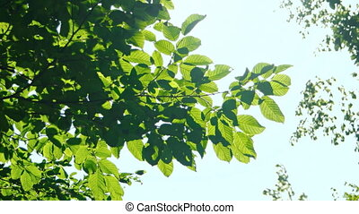 Tree branches against the blue sky. FullHD footage