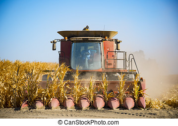 Corn Harvest - Closeup of large corn harvester coming to the...