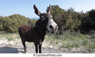 Funny donkey looking at the camera - Donkey looking at the...