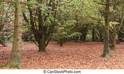 Falling leaves - Autumn leaves falling to the ground.