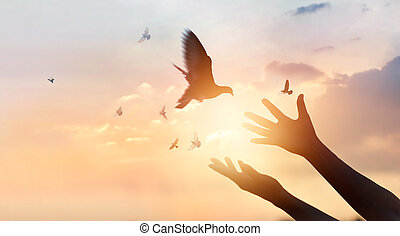 Woman praying and free bird enjoying nature on sunset...