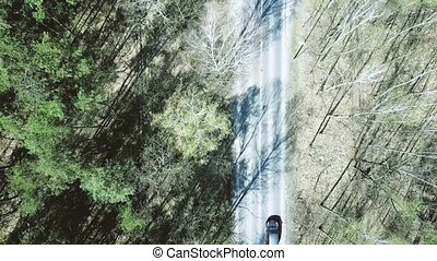 Car road in the forest on a spring day - Aerial rising shot...
