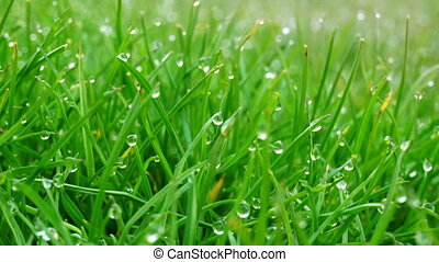 Dew drops on bright green grass with sun flare