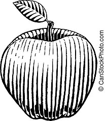 Vectorized Ink Sketch of an Apple - Illustration of a...