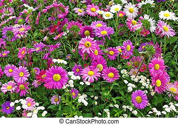 Flower bed of autumn flowers - Flower bed of flowering...