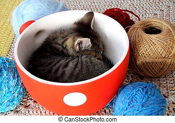 Kitten sleeping in a bowl surrounded by a balls of wool