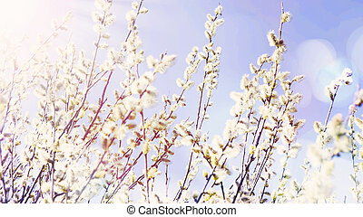 Spring willow buds branches on sky background