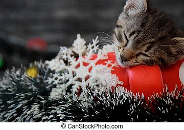 Cute kittens are sleeping among the New Year's decorations