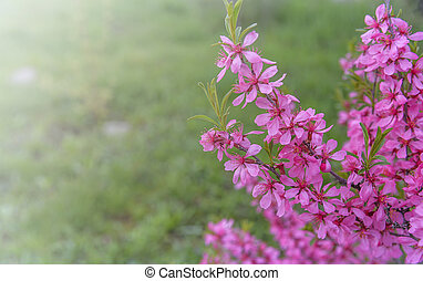 Flowering bush on the background of grass. Flowers are pink.