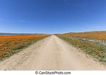 California Poppy Road