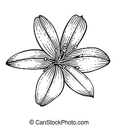 beautiful lily flower - beautiful lily in the style of black...