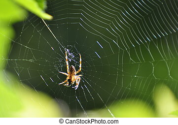 Spinning spider - A successful spider has caught an insect...