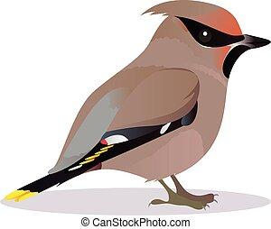 Waxwing bird cartoon vector illustration
