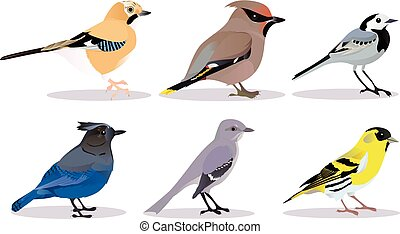 Set of birds vector illustration