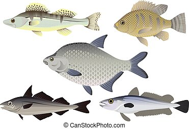 Set of fish vector illustration