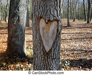 heart carved in tree trunk in autumn woods