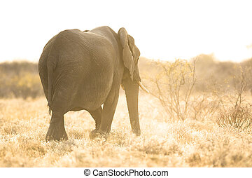 Elephant at sunrise.