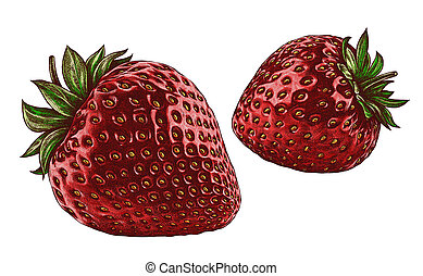 Engrave isolated strawberry hand drawn graphic illustration...