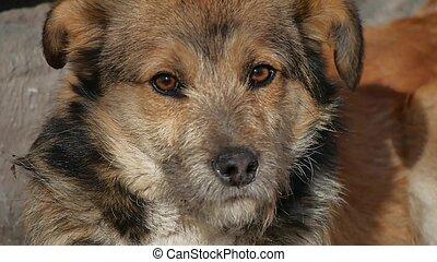 Abandoned shaggy dog sits on street - Abandoned shaggy dog...