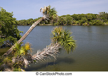 Palm Trees Over Indian River