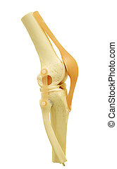 plastic study model of a knee replacement clipping path.