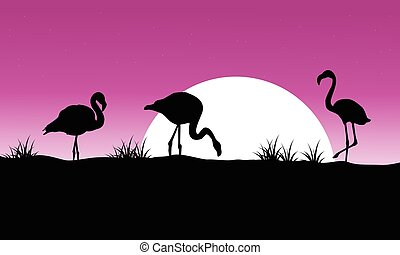 Flamingo at sunset scenery silhouettes