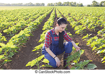 Farmer girl looking at sunflower leaves - Happy young farmer...