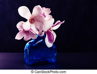 Blooming magnolia on dark background - Still life with...