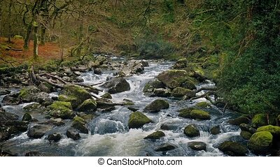 Scenic River Through The Forest - Pretty woodland scene of...