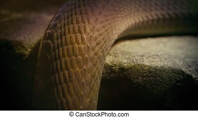 Snake Slithering Over Ledge Closeup - Snake body moving over...