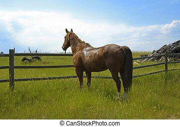 Horse on Wyoming Landscape