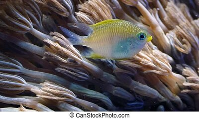 Fish Feeding On Tiny Particles By Coral - Pretty colorful...