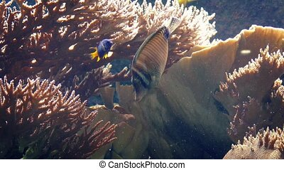 Pretty Coral Reef With Many Fish Swimming Around - Many...