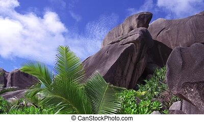 beach with rocks and palm trees on seychelles - travel,...