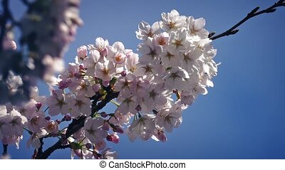 Bees Collect Nectar From Blossoms - Flower blossoms on sunny...