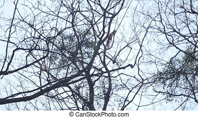 squirrel is climbing a tree stem