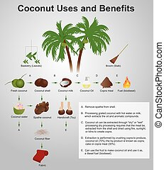 coconut uses and benefits - coconut production copra,...