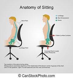 lumbar regio. Anatomy of sitting