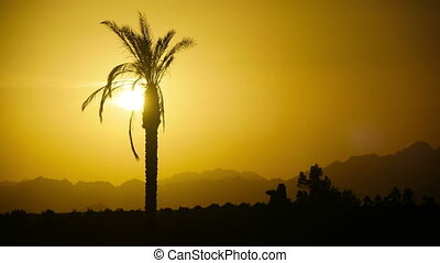 Silhouette of Tropical Palm Tree at Sunset, Time Lapse. One...