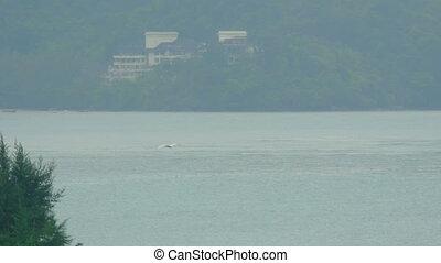 White Egret at Phuket Airport - Great white Egret flies over...