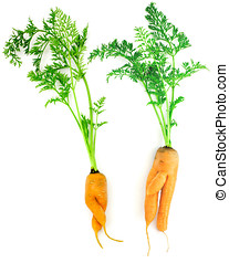 Carrots as a boy and girl - Carrots as a girl and a boy on a...