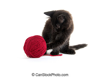 Black kiten with yarn - Cute black kitten playing with a...