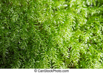 Floral background with fresh greenery leafage in sunlight...