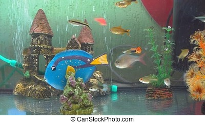 Fish in Contact Zoo - Fish Is located in the petting Zoo