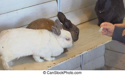 Rabbits in the petting zoo - Young family feeding the...