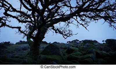 Ancient Tree On Windswept Mountainside - Gnarled old tree on...