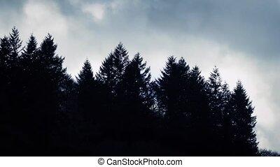 Dark Trees On Dramatic Moving Sky