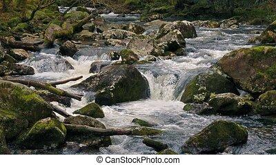 Scenic River In The Wild - Pretty woodland scene of river in...