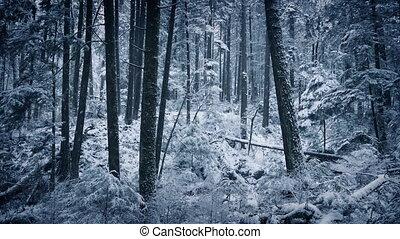 Winter Woodland In The Snow - Wild forest landscape under...