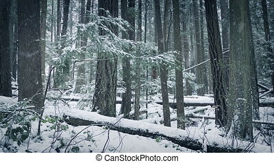 Wild Forest In The Snow